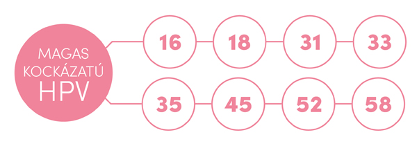 papilloma vírus 3. szint leírja a féreg fejlődési ciklusát