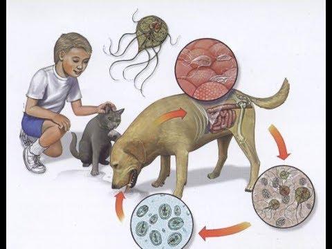 milyen paraziták élhetnek az emberi testben