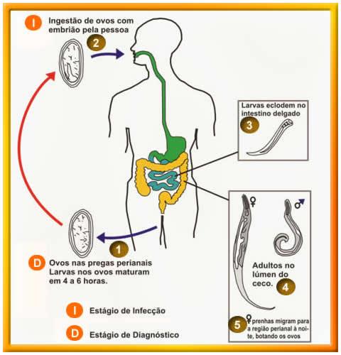 oxiurus tudományos név paraziták diszkográfiája