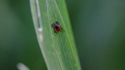 paraziták legújabb hírlevele talpi szemölcs folyékony nitrogén után