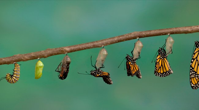 pillangó zeugma pulyka vélemény