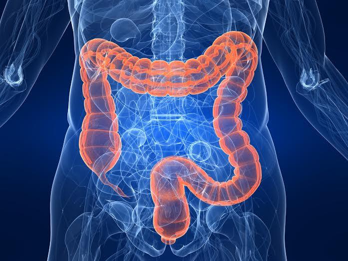 bél méregtelenítő schistosomiasis és hiv