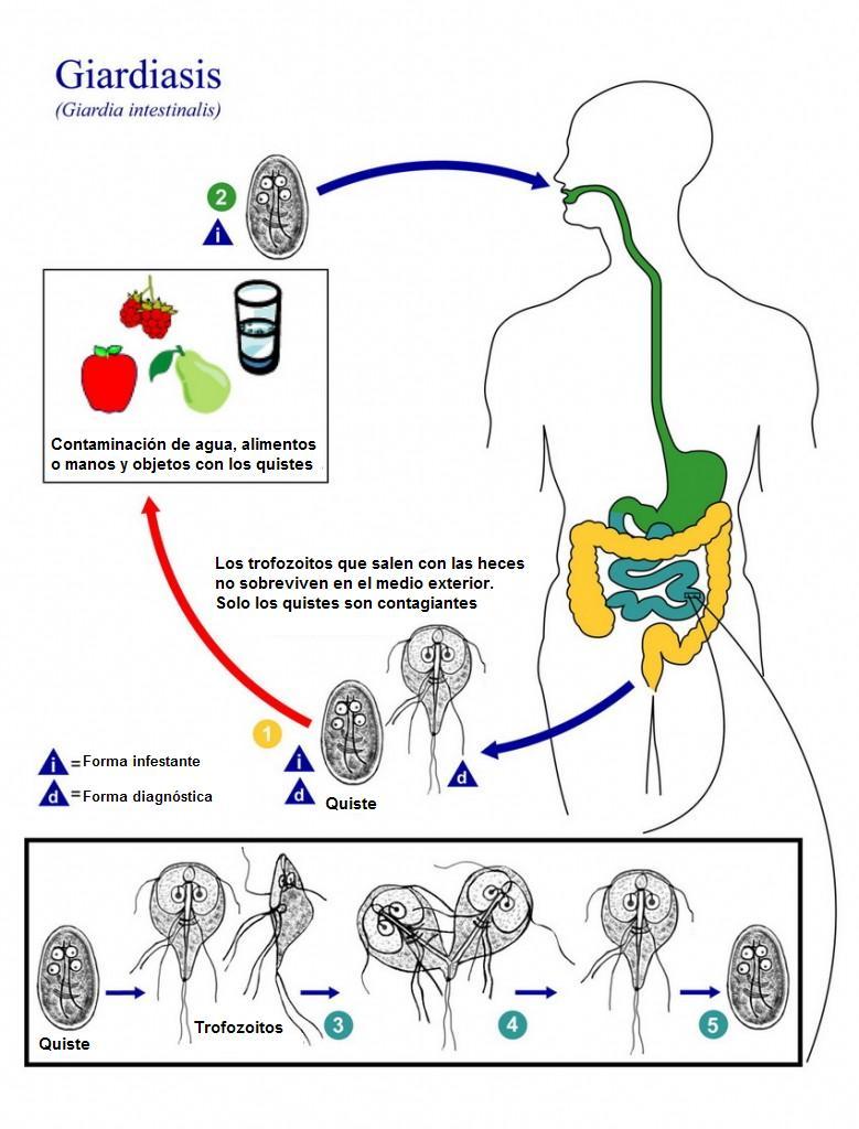 szemölcsök hogyan kell cseppfolyósítani a nehézfémek testének méregtelenítése