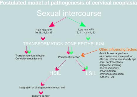 a lapos cervicalis condyloma kezelése az emberi papillomavírus fertőzés megöl