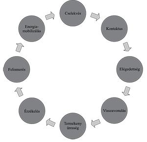 evolúciós ciklusú pinwormok