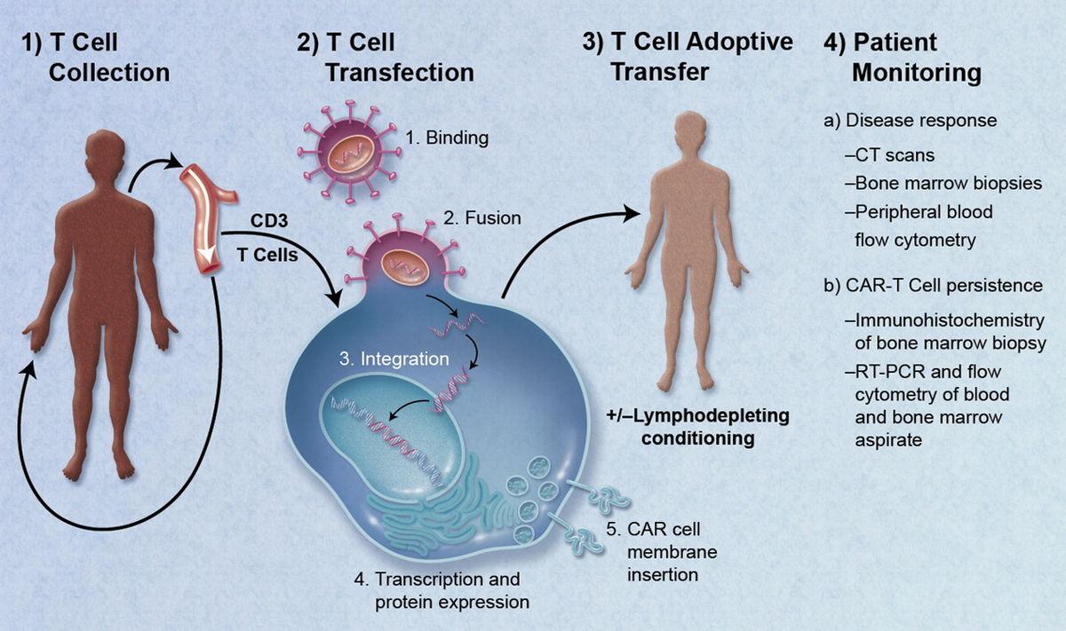 emberi papillomavírus diamegosztása