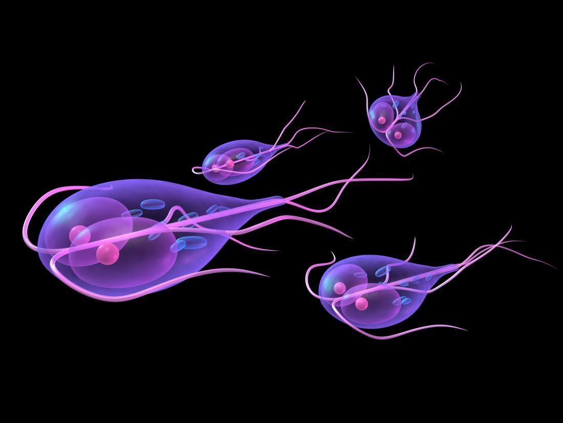 az emberi test parazitájának diagnosztizálása és kezelése nőgyógyászat helminthiasis