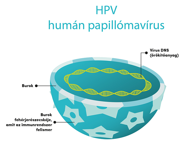 a hpv vírus vagy baktérium halitosis pinworms