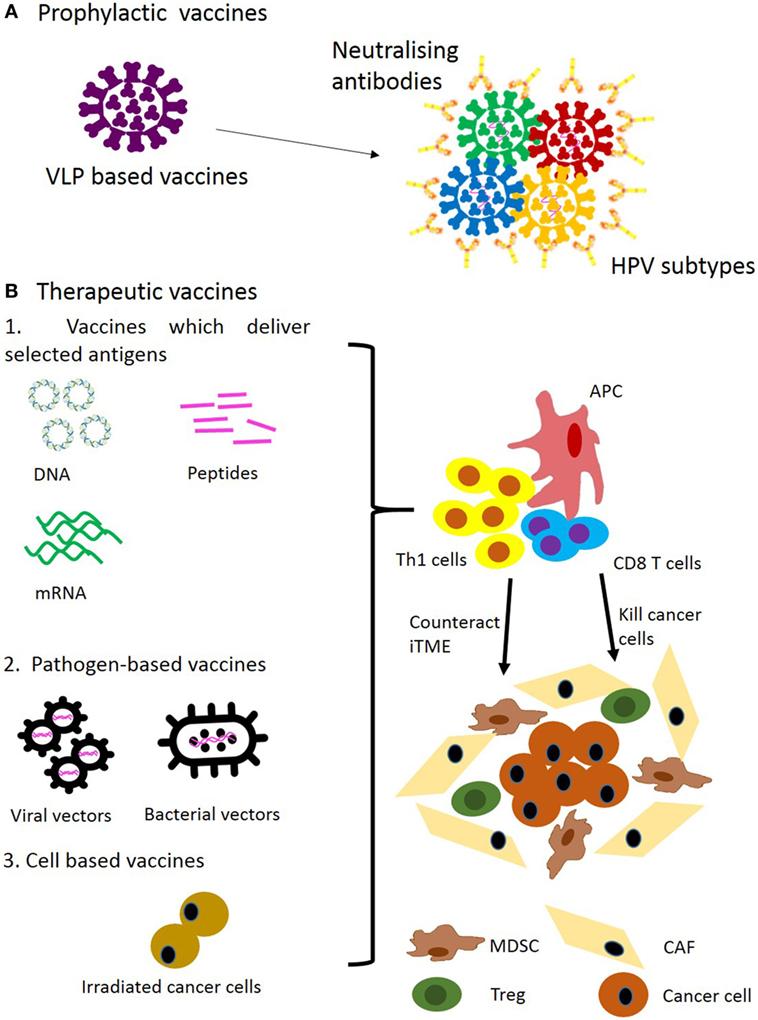 hpv vírus és lymphoma