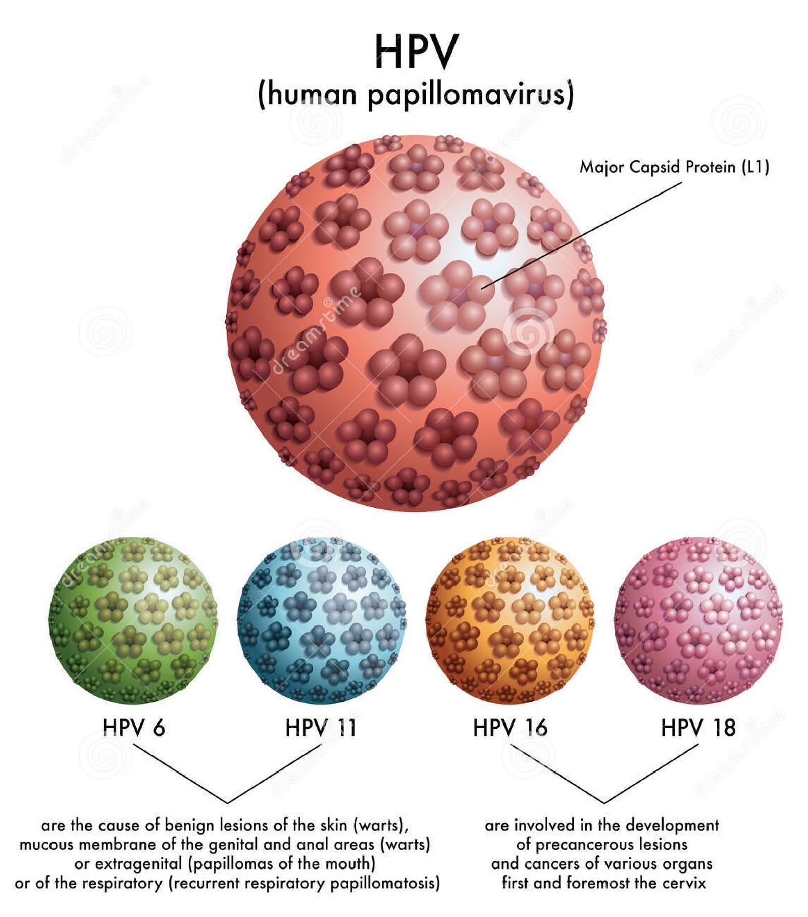 humán papillomavírus férfiak számára