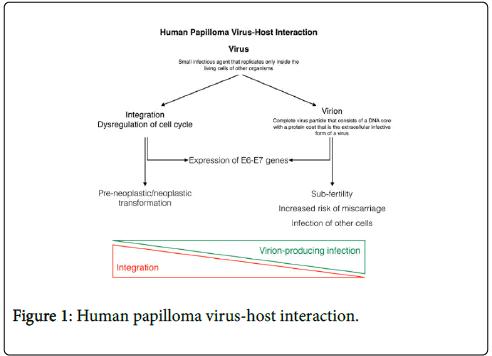 papilloma vírus és gardasil