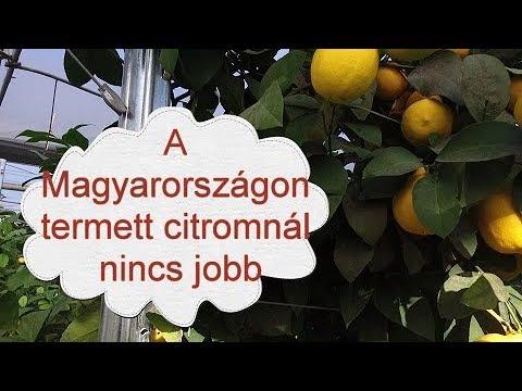 paraziták citrom betegségekkel parazita paprika
