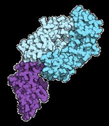 petefészekrák immunterápia
