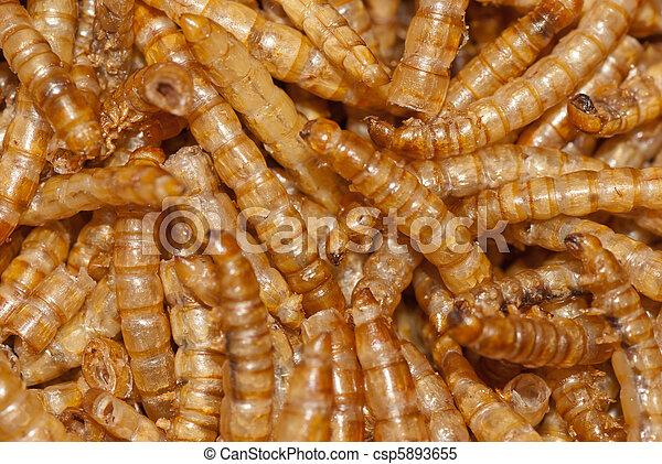 méregtelenítő turmix recept verme oxiurus em caes