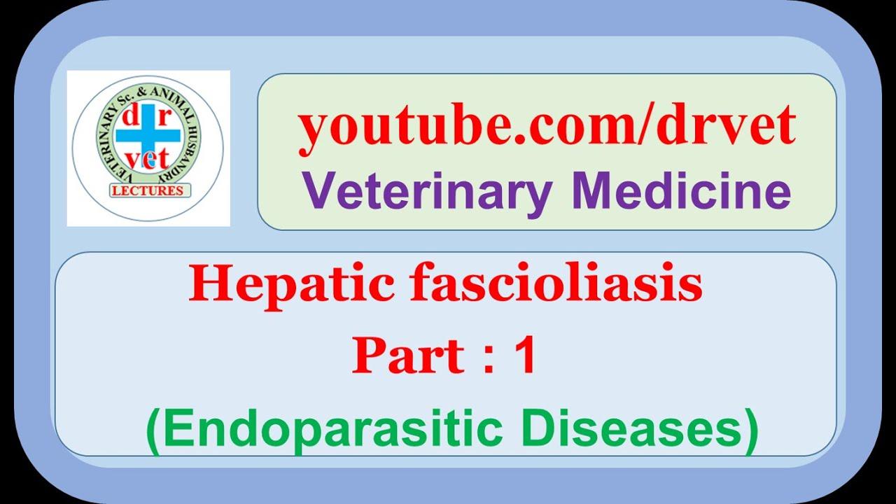 Fascioliasis patomorfológiája, cholangitis